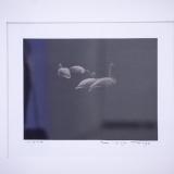 """Remigijus Treigys, """"Gulbės"""". Fotografija, 2018 m. Nerijaus Jankausko nuotr."""