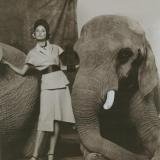 4-german-vogue-ysl-elephant