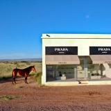 3-prada-horse