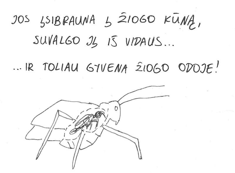 parazit9